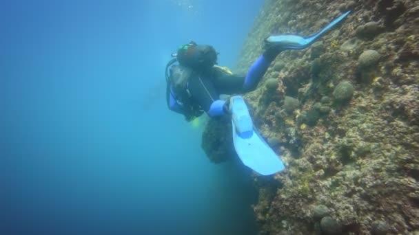Divers underwater near coral reef