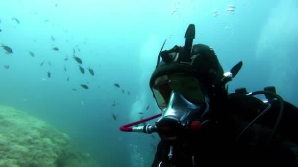 Underwater foorage of Divers in the water
