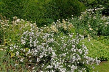 Wilde vegetations in garden