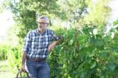Fotografie mužské vinař stojící na vinici