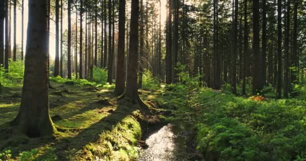 Silent Forest na jaře s krásné světlé sluneční paprsky