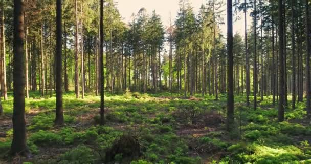Csendes erdő tavasszal a szép fényes nap sugarai