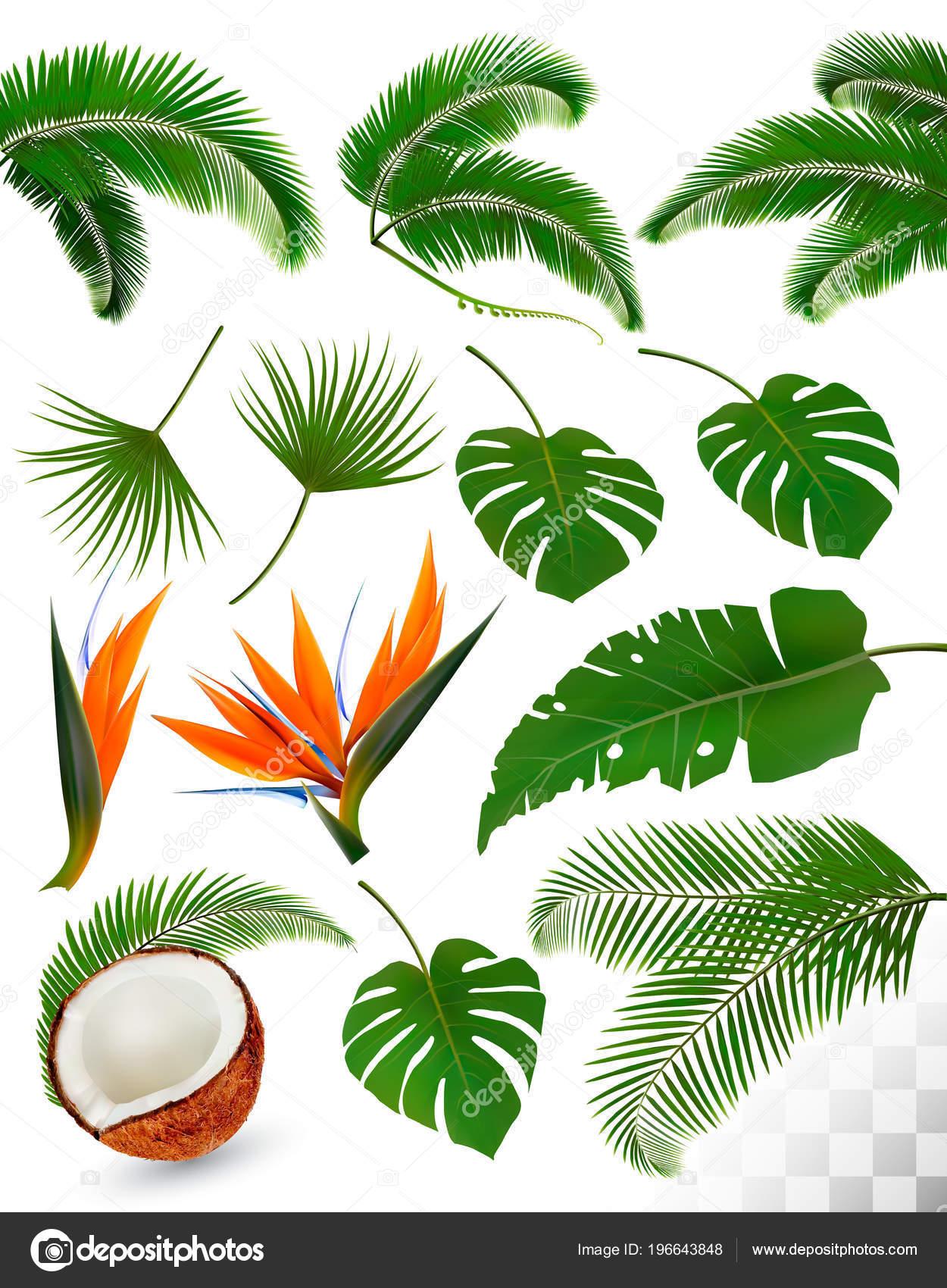 Листья цветы на прозрачном фоне