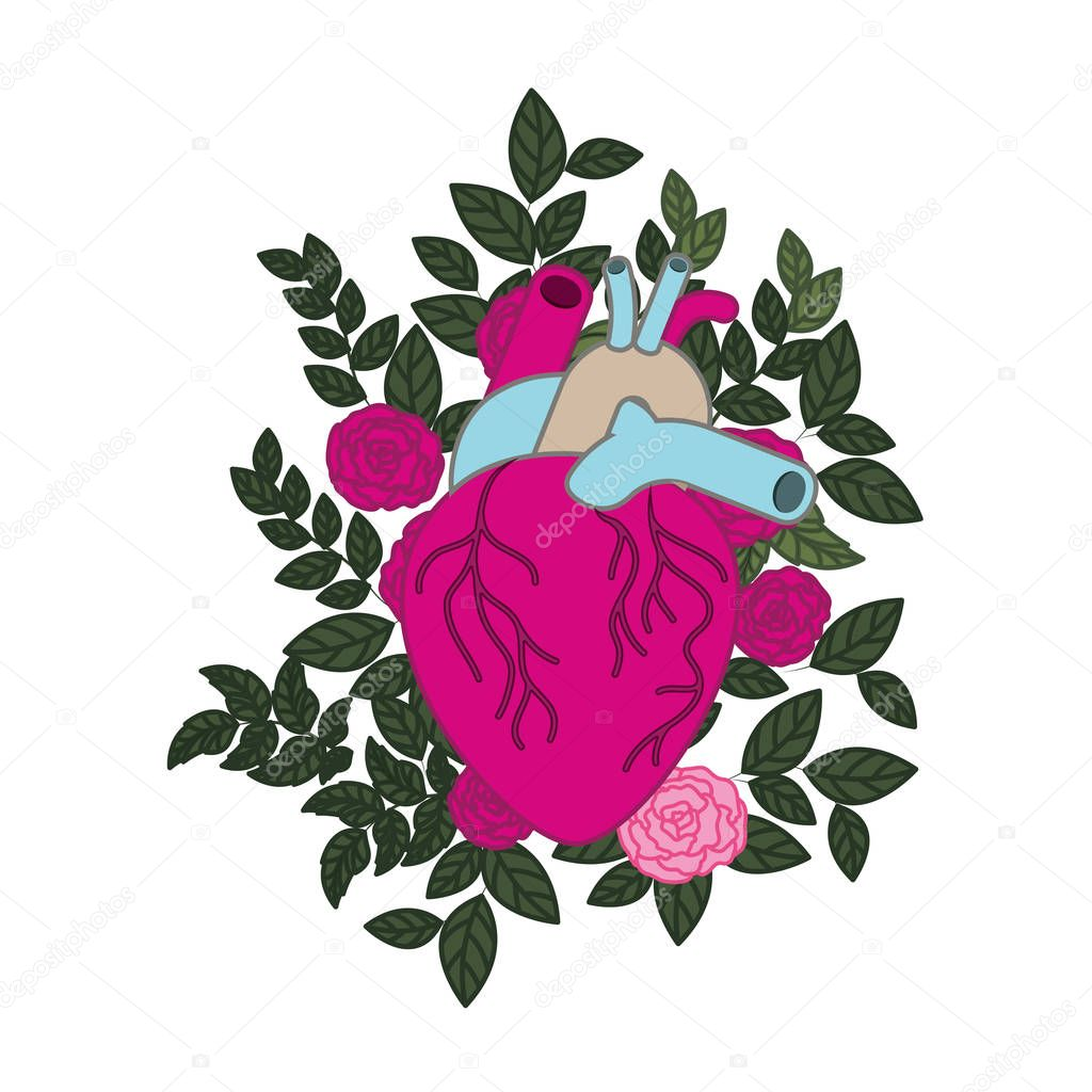 heart with veins and roses isolated icon