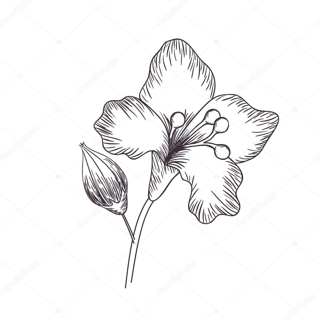 flowers and leafs isolated icon