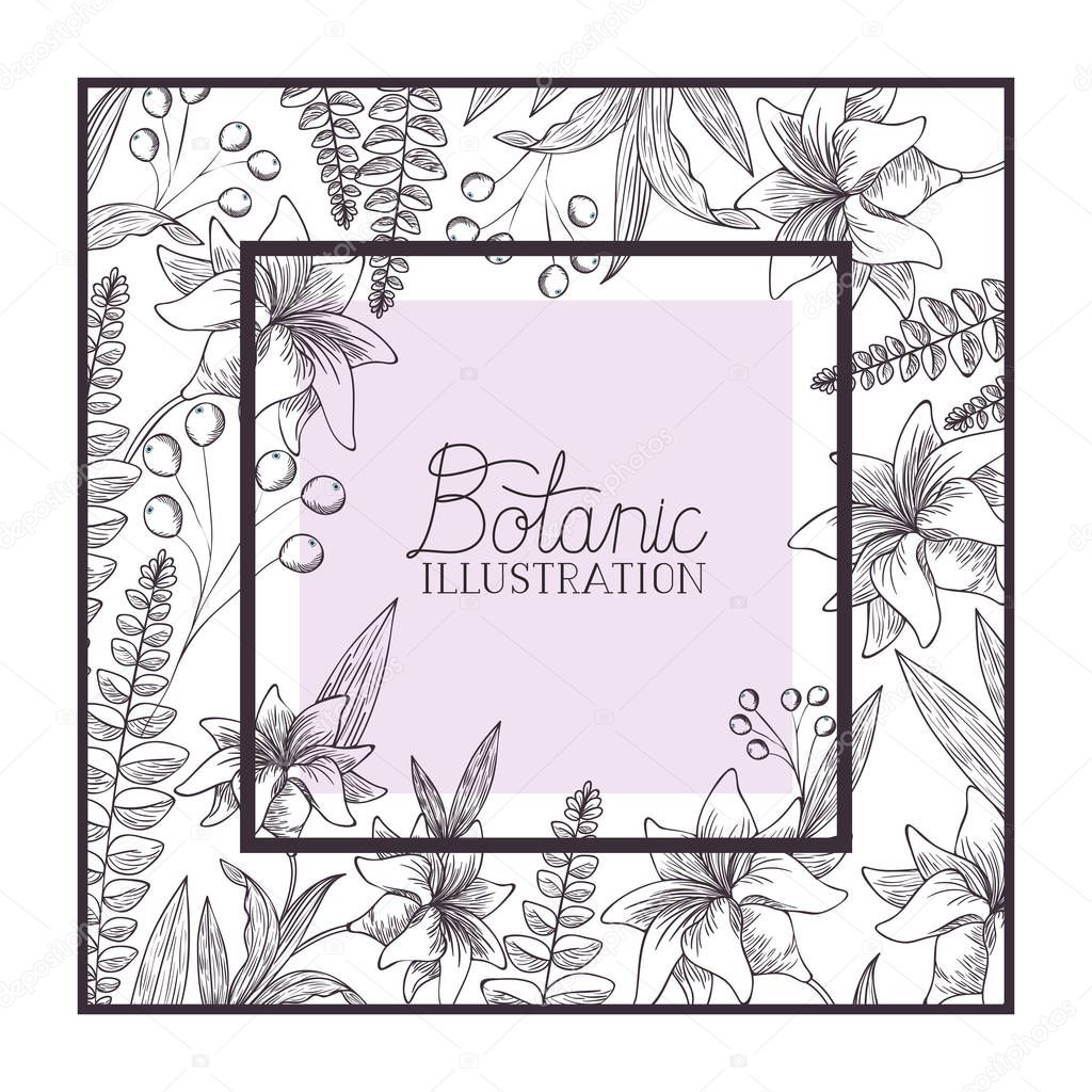 botanic illustration label with plants