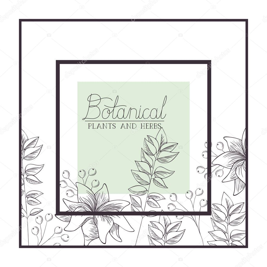 botanical plants and herbs label