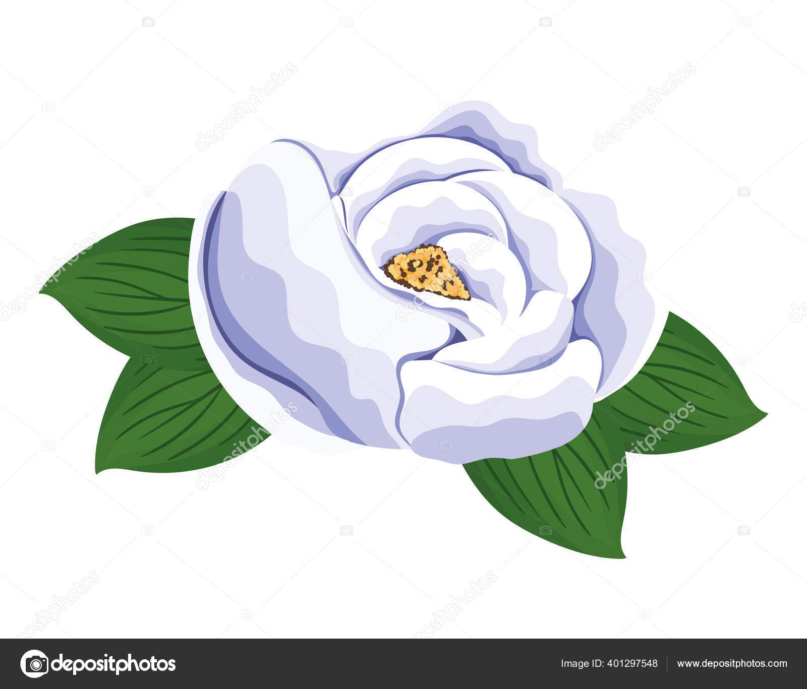 Bunga Mawar Putih Dengan Daun Lukisan Desain Vektor Stok Vektor C Grgroupstock 401297548