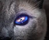 Lila galaxis belsejében szemet titokzatos macska.