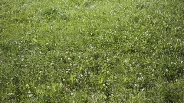 frisches grünes Gras mit fließendem Wind