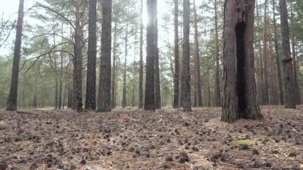 Krásné klidné lesní v podzimním čase. Podzimní krajina. Složení přírodní