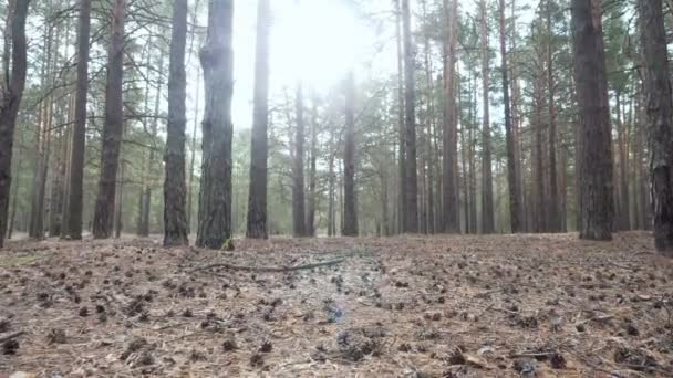 Krásné klidné lesní v podzimním čase