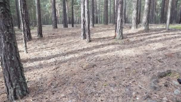 Bella foresta tranquilla nel tempo di autunno
