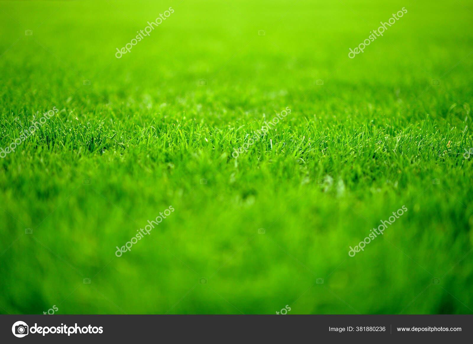 latar belakang rumput hijau tutup stok foto c aletia 381880236 depositphotos