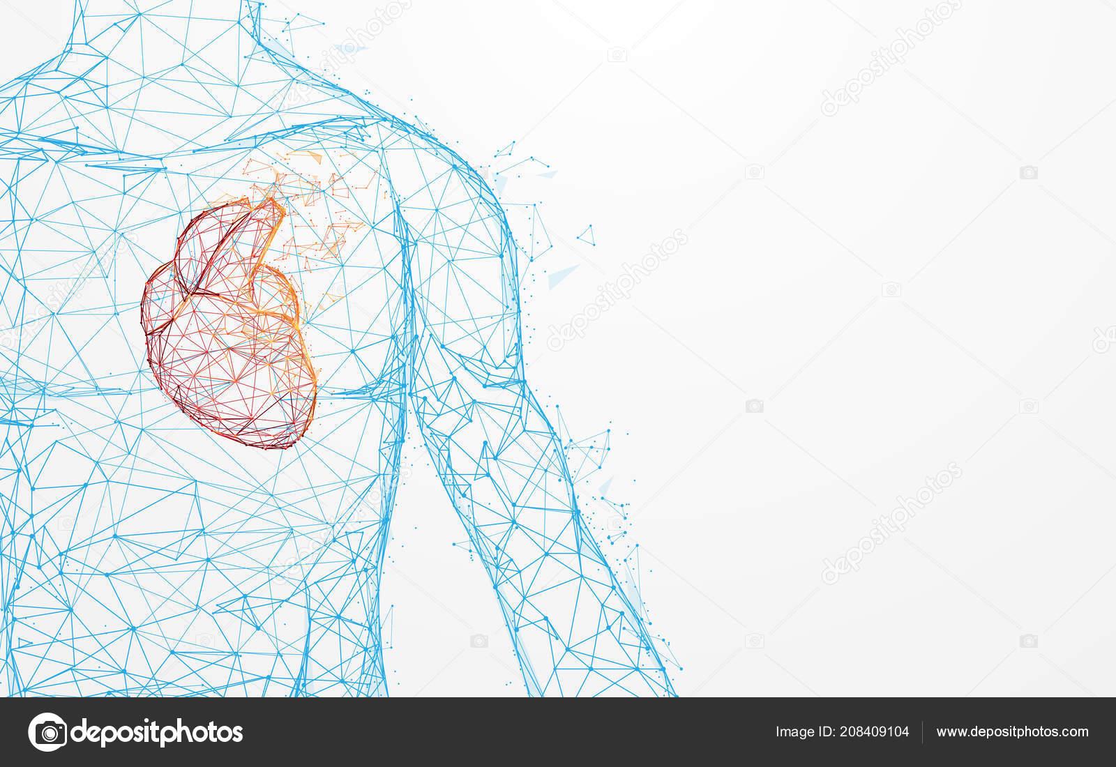 Corazón humano Anatomía forma líneas y triángulos, punto de conexión ...