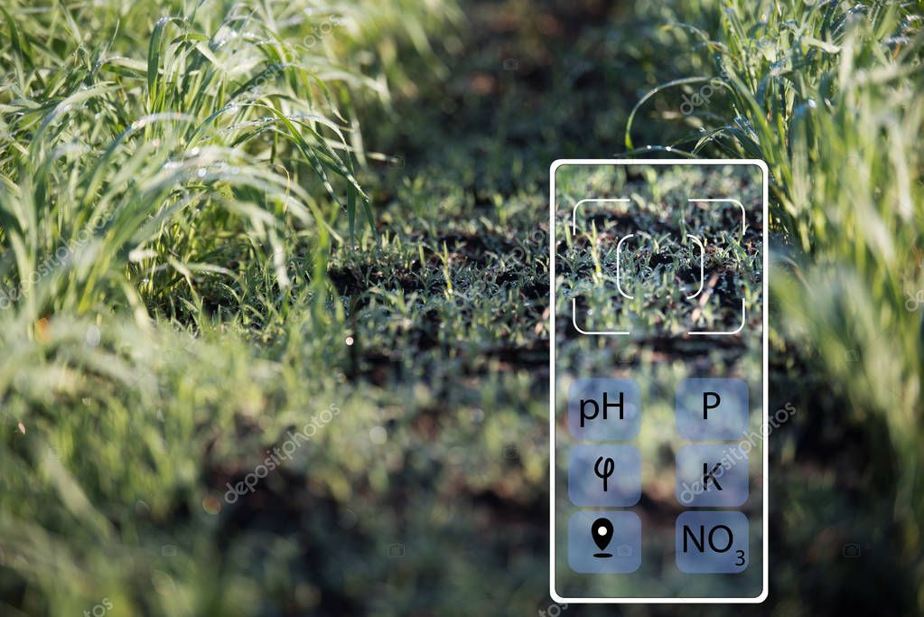 With the help of a smartphone determine the state of the soil (acidity, humidity, phosphorus, potassium, nitrate nitrogen). Technologies in agriculture.