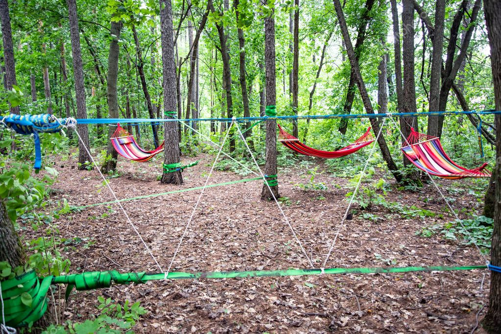 Hammocks and ropes are stretched out in the forest for rest and activities