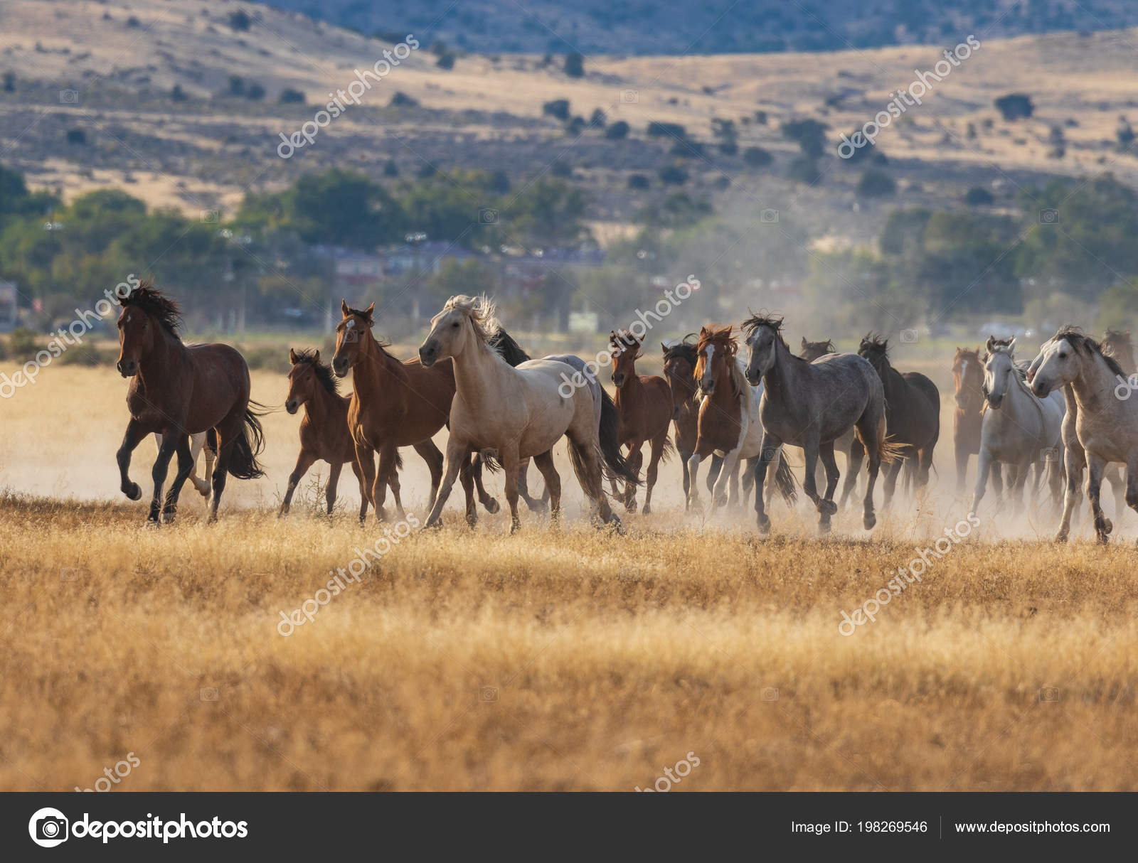 Herd Wild Horses Running Utah Desert Stock Photo C Twildlife 198269546