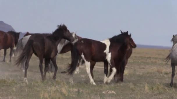 divoké koně v poušti Utah na jaře