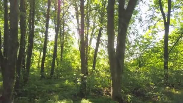 4k letecké. Pomalé plynulé Podívejte se uvnitř zelené letní dřevo.
