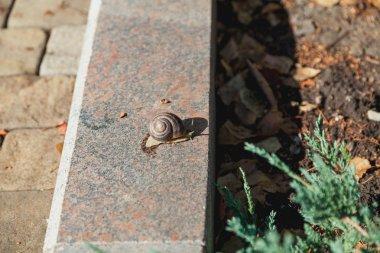 snail crawling on granite surface