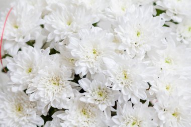 bouquet of white flowers Chrysanthemums