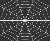 Fotografie Spider web illustration