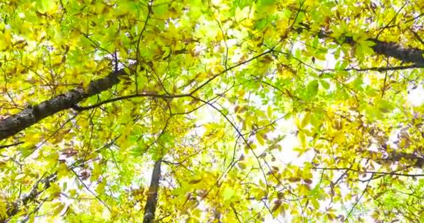 Foresta in autunno con le foglie verdi e gialli in rami. video 4K
