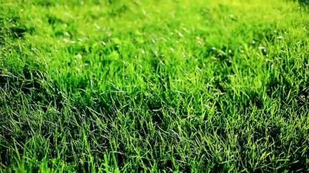 Closeup trávník, zelená tráva, pohybující se ve větru. Příroda, zemědělství, Park