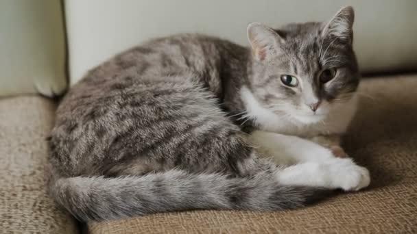 Die Katze liegt auf der Couch im großen Haus