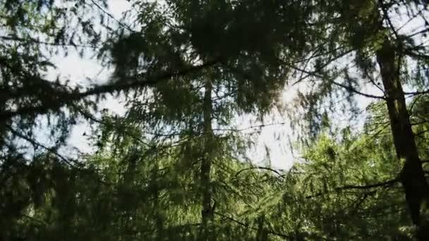 βίντεο 1080p-κορώνες των δέντρων με φωτεινό απογευματινό ήλιο και ακτίνες
