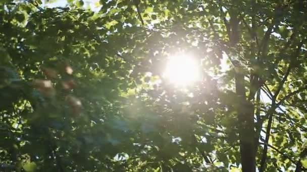 Video 1080p - Crowns of trees with bright afternoon sun and rays