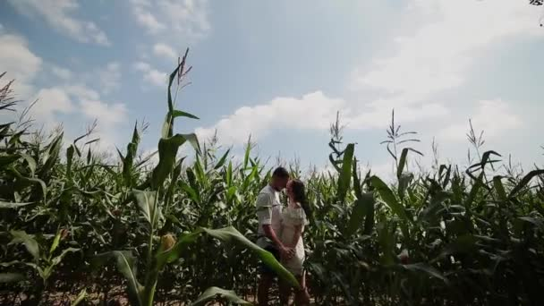 Loving couple each other standing in a corn field hugging and kissing.
