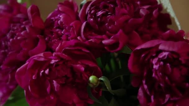 Pupeny z růžových růží jako pozadí. Pohyb kamery na okvětní plátky.