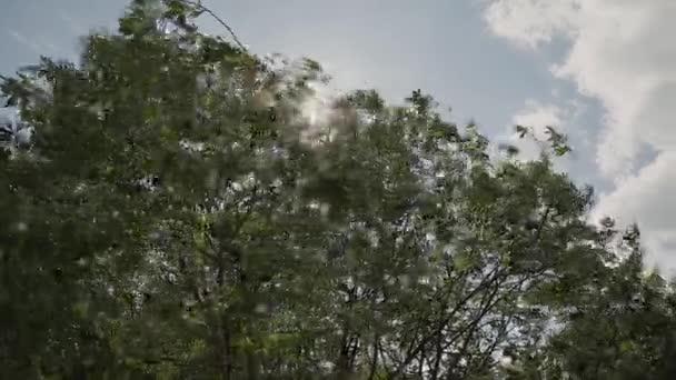 Slunce svítí sluneční paprsky přes větve a listy stromů v Pine Forest.Sunbeams lesem listy v pohybu. Paprsky slunce vrcholit přes Branches.Sun v borovém lese steadycam přesunout