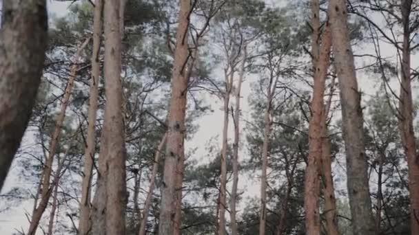 Gyönyörű fa ágak a kék ég.