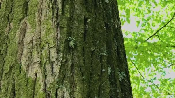 Stromová kůra je blízko. Slunečný den.