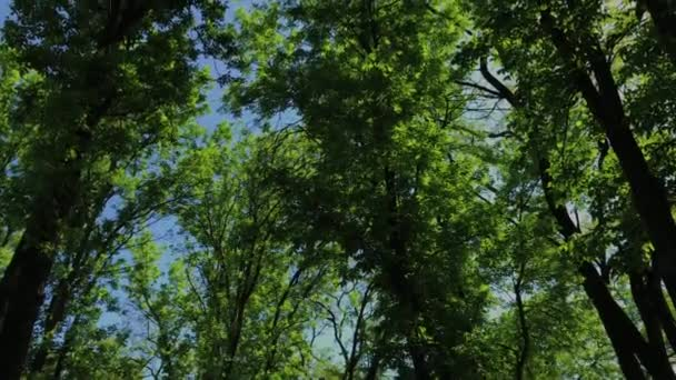 Green leaves and branches of a tree in the sun.