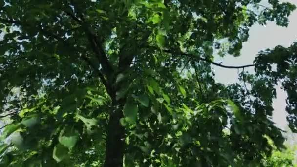 Zelené listí a větve stromu na slunci.