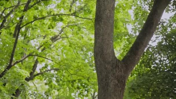 Zelené větve stromů v letním městském parku.