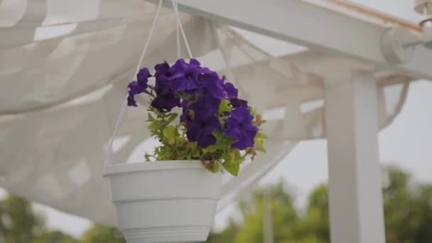 Beautiful blue flowers hanging in a pot on the roof.