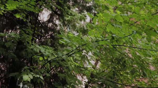 Természetes háttere ágak és levelek a zöld fa.