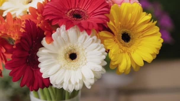 Krásné mnohobarevné květy s kapkami vody.