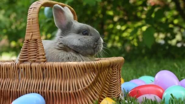 cute little bunny in wicker basket near colorful plastic eggs on green grass in park