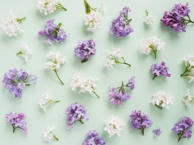 Purple lilac flowers on white background