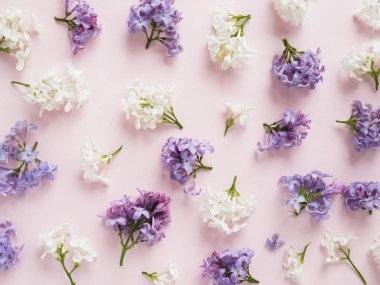Purple and white lilac flowers on pastel pink background