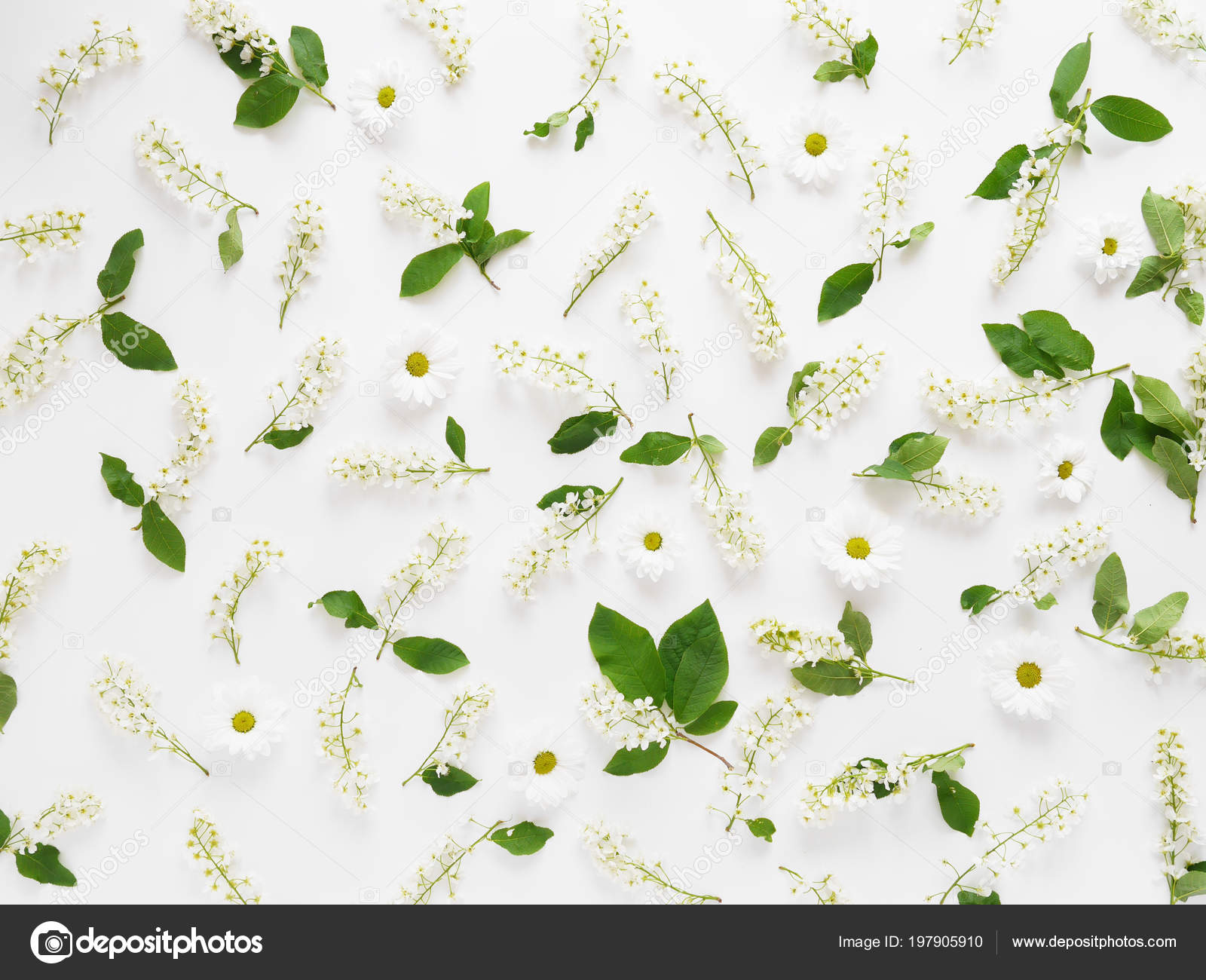 Floral Composition White Flower Daisies White Background Stock