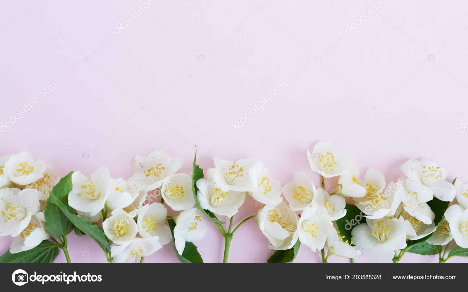 Border Jasmine Flowers Pale Pink Background Stock Photo
