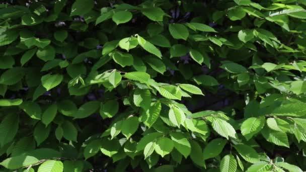 unglänzende grüne Blätter Hintergrund. Natur frische Pflanzen