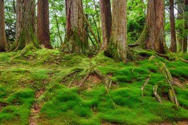 Green Moss Carpet